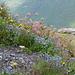 Blumenpracht im Abstieg.