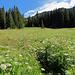 Der Wanderweg geht streckenweisse durch fast hüfthohe Magerwiesen. Traumhaft!