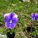 weitere Blumenschönheiten