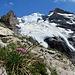 Die Eismassen des Bluemlisalpgletschers ergiessen sich ins Tal