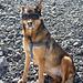 Der Hund der belgischen Seilschaft mit Gletscherbrille ;o)