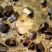 <b>Granati di Obergurgl (varietà almandino).<br /> Fe3Al2(SiO4)3</b>