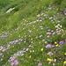 Bellissimo tappeto di fiori