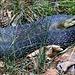 Schlange auf dem Steinige Ries Steig