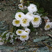 Glasierte Blumenpracht, etwas vor dem Tälihorn.<br />Ein brauchbares Gipfelfoto gabs leider nicht.