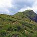 Wieder unten auf dem markierten Bergweg vom Bällenhöchst her kommend