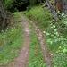 die  Suone  Trusera ist (noch) trocken (das Goms ist aber  eindeutig feuchter als  das  Mittelwallis),  der Weg  aber  gemütlich.