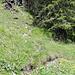 Der Einstieg ist am besten mit der Karte zu finden. Kurz nach der ersten Weggabelung 1671m ist eine (2009) grosse Schutt Runse. In dieser hoch und Ausschau halten nach dem Pfad der rechts in den Wald geht.