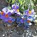 Eine mir leider unbekannte Schönheit. Botaniker müsste man halt sein!