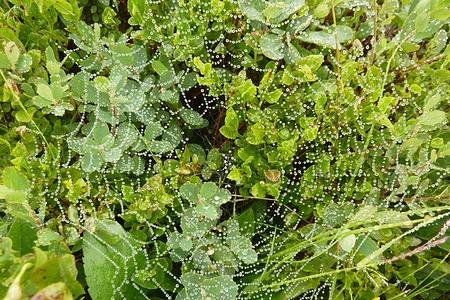 Spinnwebgeflecht im Nieselregen