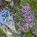 Blumenpracht am Gipfel