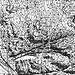 Auszug aus der IGM-Karte 1934 (der gepunktete Wegverlauf heisst: Sentiero Difficile)