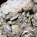 Angolo dei minerali I - Quarzo e muscovite