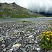Ein Spaziergang um den Stausee Lac de Salanfe dauert etwas mehr als 1h.