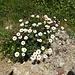 Bouquet am Wegrand