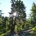 hübsche Bäume überall