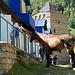 Neben Schafen und Kühen rannte auch ein Pferd herum