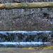 Reflecting water near Nideltobel