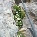 Selbst kurz unter dem Gipfel des Hochsailers grünt und blüht es.