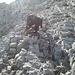 im Altmanngipfelaufbau(Schwierigkeitsgrad 1)