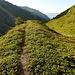 Weiter gehts sanft hinunter Richtung Bergwald.