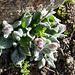 Mir unbekannte Pflanze auf 3800m