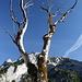 Blick durch die Äste eines abgestorbenen Baumes zur Rappenspitze