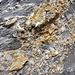 interessante Gesteinsstrukturen