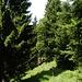Durch den Wald Richtung Reibentennen
