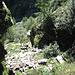Befestigte Steilstufe zuCascina di Lago