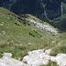 PIan Tasin: Hier runter gegen P.1964 und Alpe Tramoggio