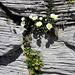 kleine, feines Blumen-Arrangement