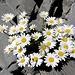Blumen in Felsritzen - einfach betörend 1