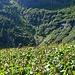In den Blackenfeldern bei Canva Vecchia