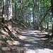 das erste Stück des Aufstiegs durch Wald - tatsächlich deutlich steiler als es hier wirkt