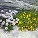 eine reiche Flora, unser ständiger Begleiter