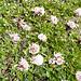 Blumenpracht  am Rande der Einöde