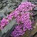Pink auf grau ist doch sehr im Trend !!
