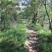 Und wieder der Trail an der Tafelkante entlang.