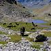Eringer im Niggelingtälli auf  ca. 2650 m