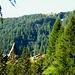 Auf dem steilen Anstieg zur Alpe Erbea - bezeichnender Name Ör de la Medee (Bergheu-Hang)