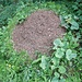 Mächtiger Ameisenhügel am Wegesrand