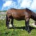 Ein Pferd mit Glocke