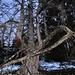 Urwüchsige Bäume säumen unseren Weg