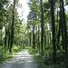 Radweg Richtung Feldkirch durch einen wunderschönen Märchenwald - jeder Baumstamm ist mit Efeu umwuchert