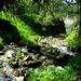 Auf dem schönen Abstieg nach St. Luc. Immer am Bach entlang geht es durch hübsche Waldbilder hinab.