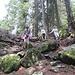 Verwurzelter schattiger Waldweg