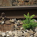 Darf bleiben, obwohl täglich Dutzende von Zügen an ihm vorbeihuschen!