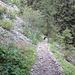 Durch den Wald runter nach Brülisau