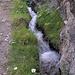 offene Rohrbergeri, nach Steinegga